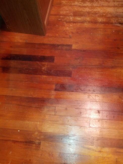 Mold(?) in Hardwood-img_20121110_191608-1-.jpg