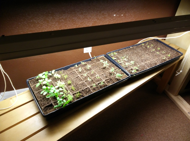 New to gardening, Mold?-img_20150215_175556.jpg