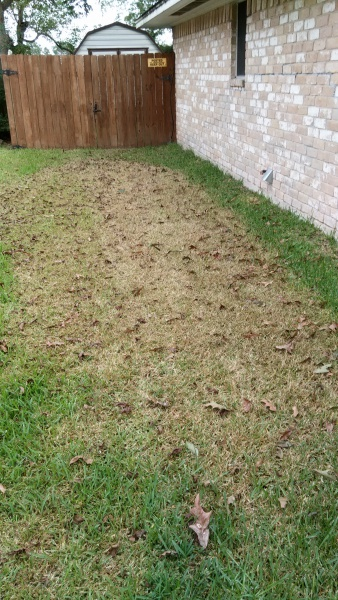 I mowed the grass and it died.-img_20160927_172203.jpg