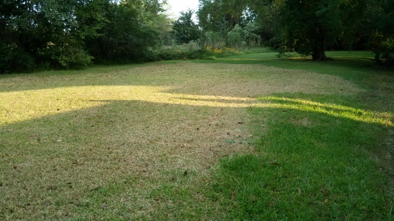 I mowed the grass and it died.-img_20161014_175010.jpg