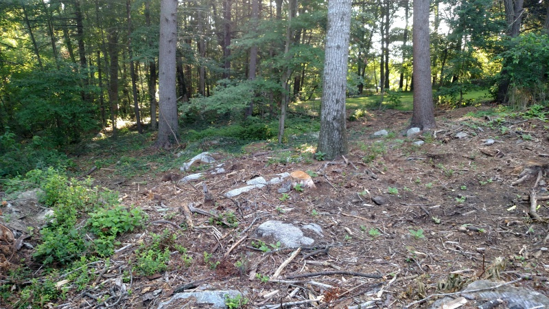 selecting trees to plant in cleared area-img_20170801_075031633.jpg