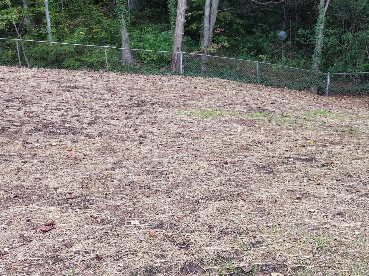 New grass seed not growing at same rate-img_20171013_174639.jpg