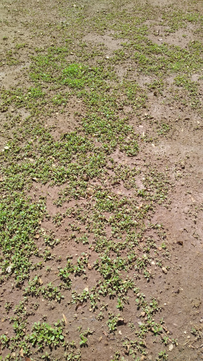 What to seed hill with-img_20180829_120141568.jpg