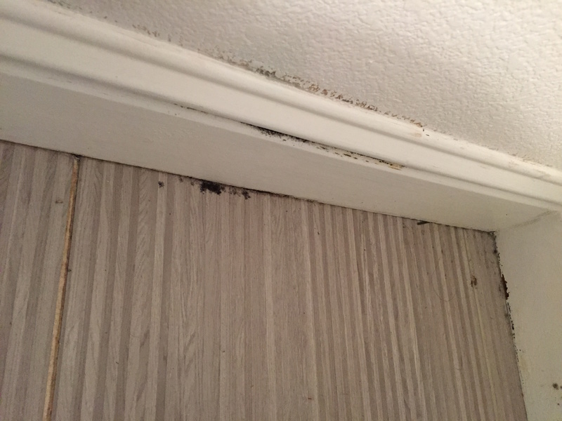 What is this growing on my bathroom baseboard? Mold?-img_2047.jpg