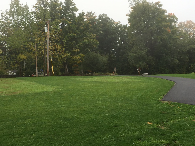Ugly Lawn, Different Grass Types, Need help-img_2128.jpg