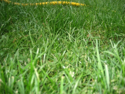 green patches in lawn-img_2204.jpg