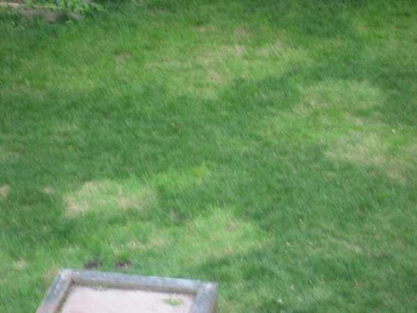 green patches in lawn-img_2209.jpg