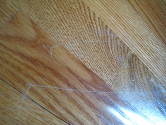 Protecting Hardwood Floors from Dog and Cat Claws | Hardwood Floor