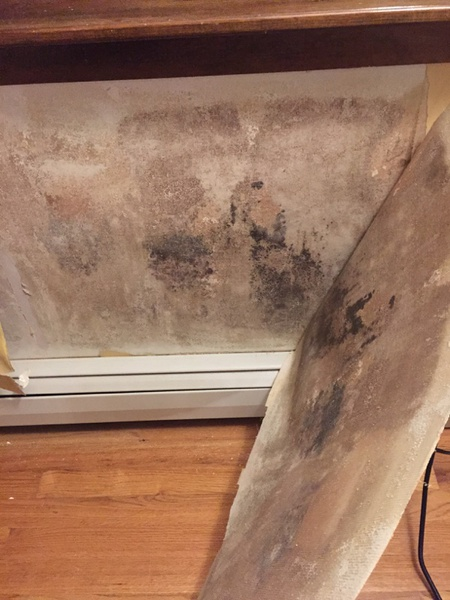 Mold Behind Wallpaper Remediation Drywall Amp Plaster