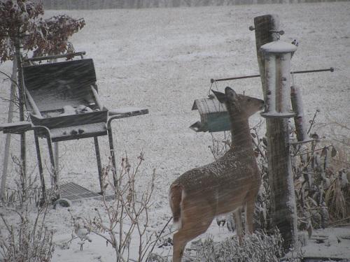 bird feeder/house stand-img_2501-500-x-375.jpg