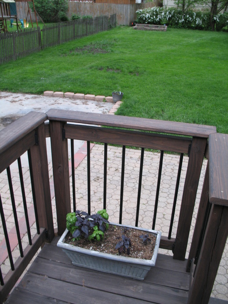 Is anyone doing any container gardening this year?-img_2682.jpg