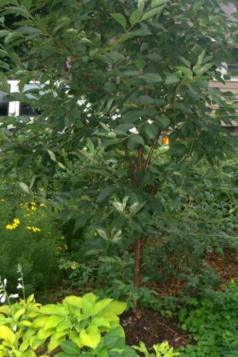 Taking care of Fruit trees-img_3546.jpg