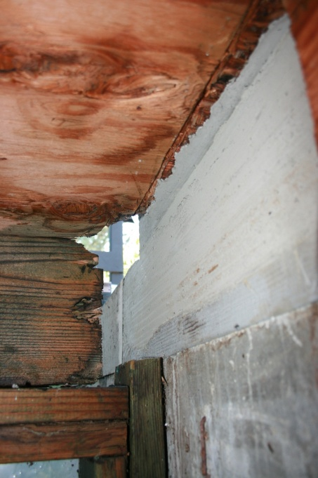 Dry rot project-img_3585.jpg