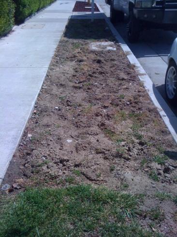 Best weed control?-img_4092.jpg