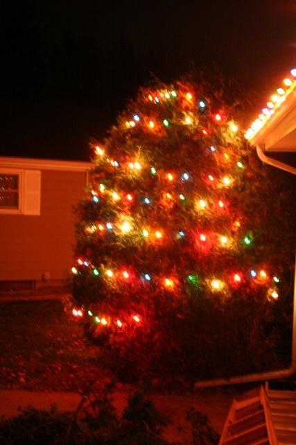 Christmas Light - Did I win?-img_4592.jpg