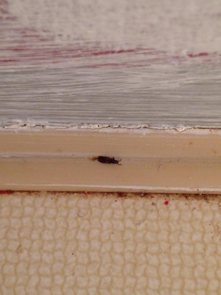 What bug is this ?-img_4908_1479957193049.jpg