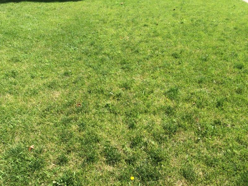 Dark green spots on lawn-img_5168.jpg