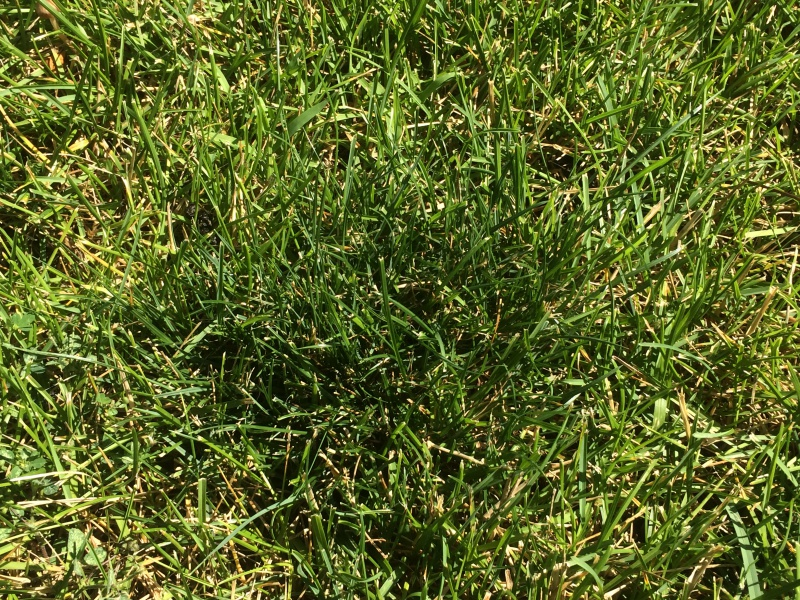 Dark Green Spots On Lawn Landscaping Amp Lawn Care Page