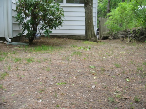 Building A French Drain Landscaping Lawn Care Diy