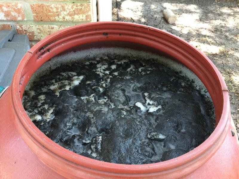 Black Froth in rain barrel?? (Warning: disturbing photo!)-img_6715.jpg.jpg
