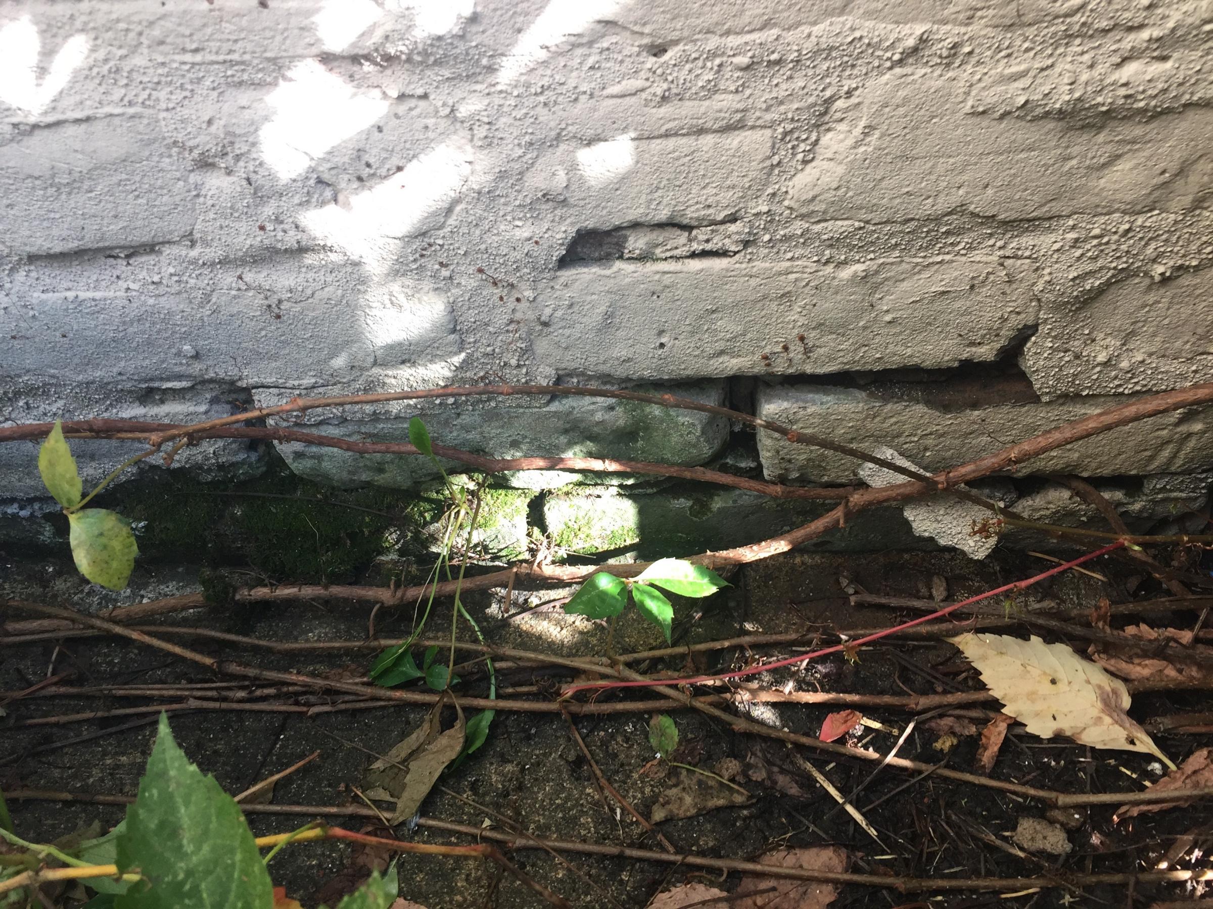 Fixing foundation bricks-img_8576.jpg
