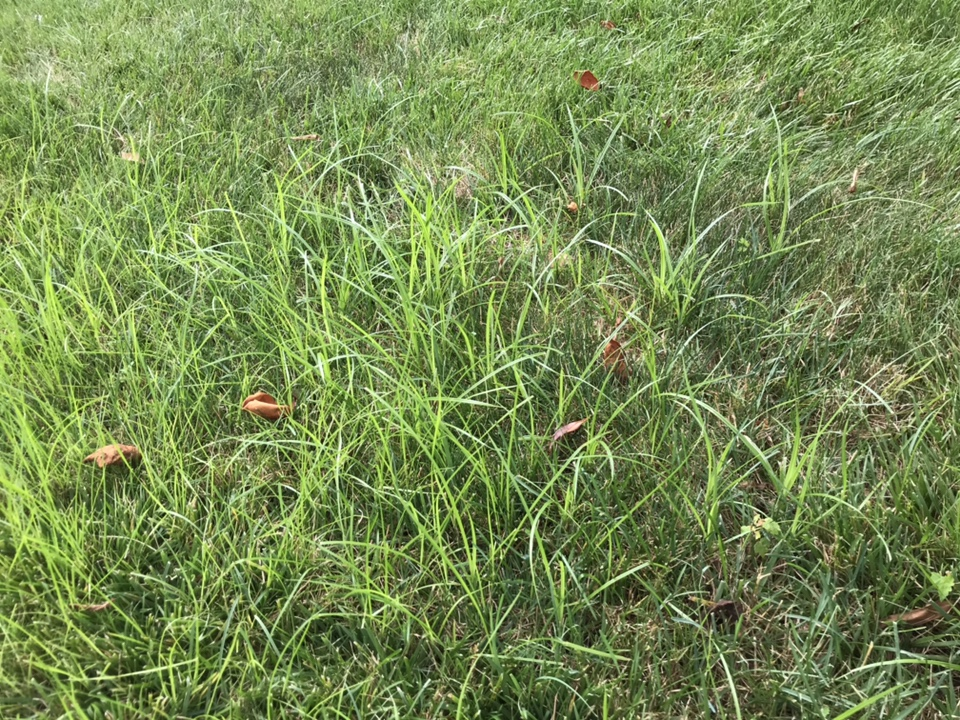 Weed ID and what to use to prevent-img_9067.jpg