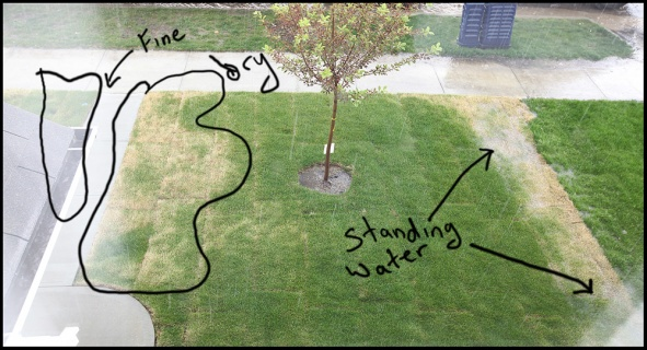 New Sod Concerns Landscaping Lawn Care Diy