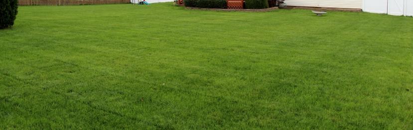 De-thatching lawn-img_9539.jpg