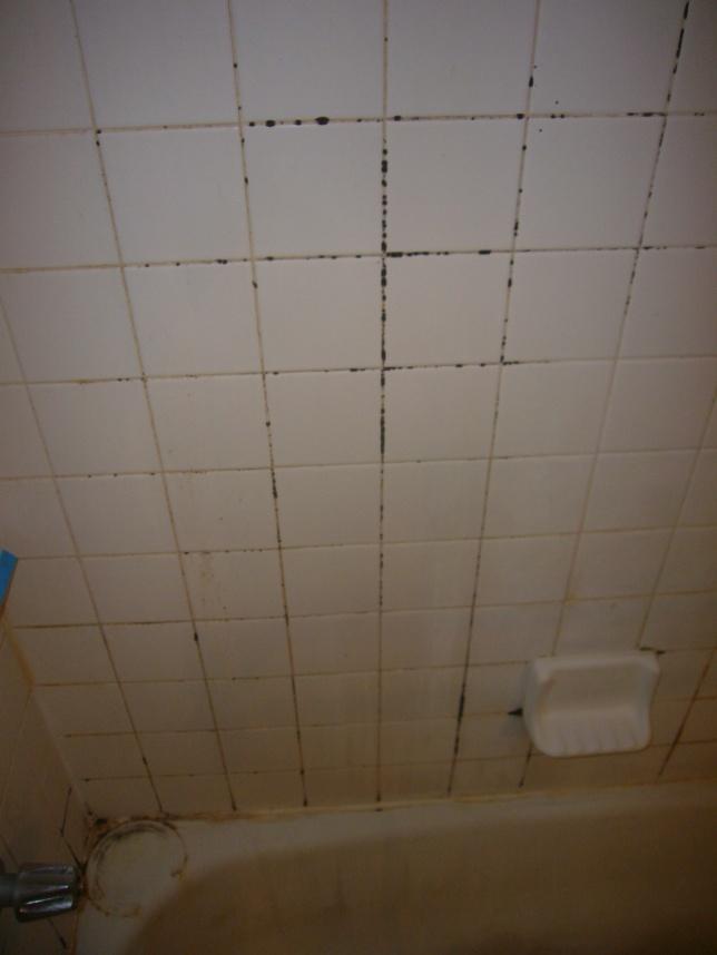 Condo Master Bathroom Reno (demo, bathtub to shower conversion, flooring)-import-008.jpg