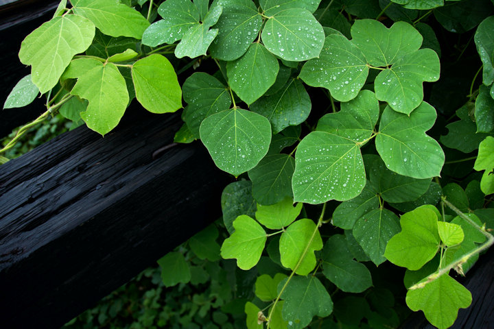 Permanent Removal Options for Invasive Plant Species