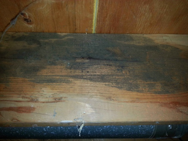 Is this really mold?-joist1.jpg