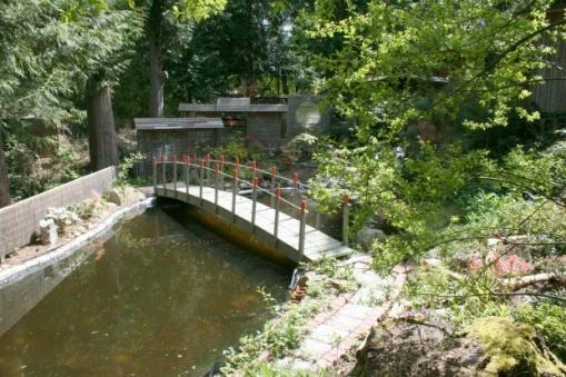 My Summer Pond Build-jp2.jpg