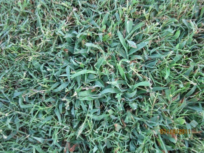 Need help with weed control-july-2011-050.jpg