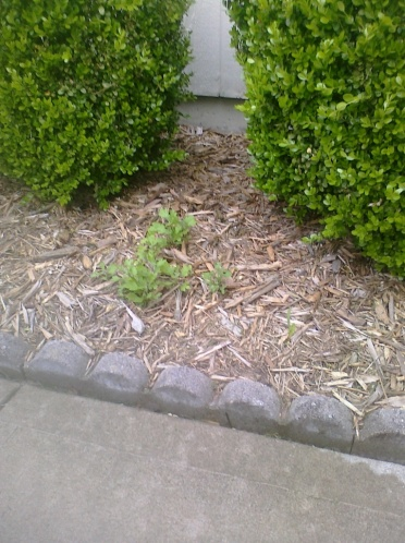 Flowerbed Edging Advice-Give me some suggestions!-landscape.jpg