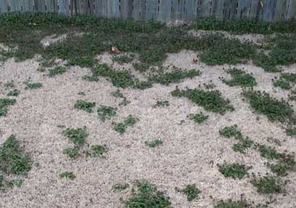 I have weeds in my yard......What should I do?-lawn.jpg