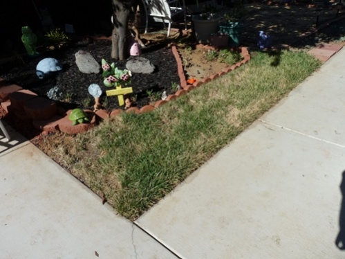 Dying grass needs help-lawn1.jpg