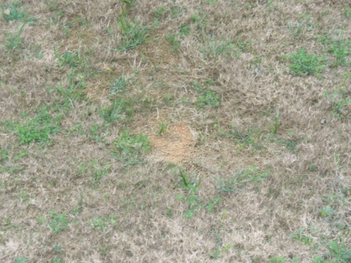Bermuda Grass Maintenance-lawn1.jpg