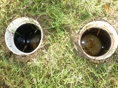 Standing Water in Underground Pipe w/French Drain??-lawn2.jpg