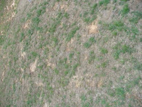 Bermuda Grass Maintenance-lawn2.jpg
