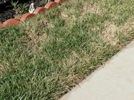 Dying grass needs help-lawn3.jpg