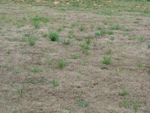Bermuda Grass Maintenance-lawn3.jpg