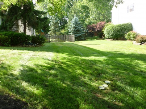 Standing Water in Underground Pipe w/French Drain??-lawn4.jpg