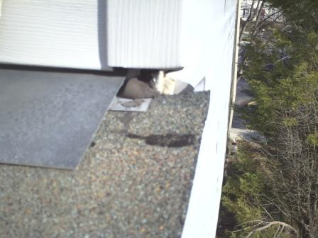 Repair or Replace Roof-to-Wall flashing-leak-windows20-compressed.jpg