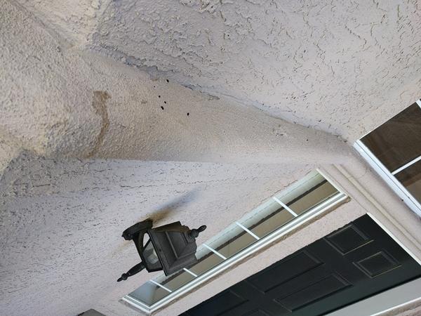 Squirrel squatter-ledge-entryway.jpg