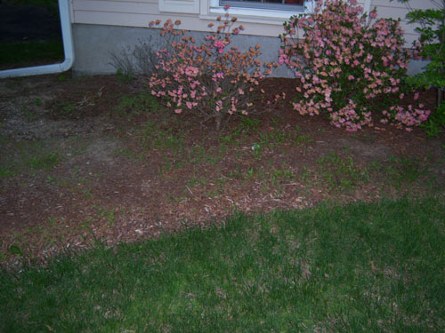 How to regain control of these mulch beds... *PICS*-left-muclh.jpg
