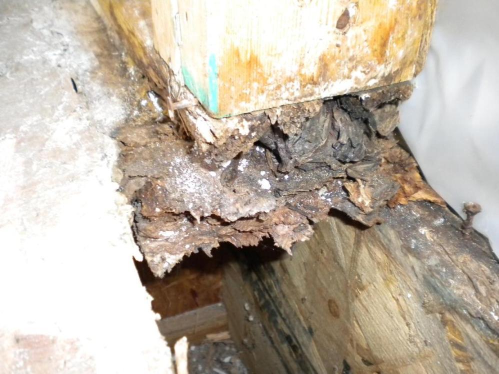 Rotten bottom plate and subfloor around exterior door-left_bottom_closeup.jpg
