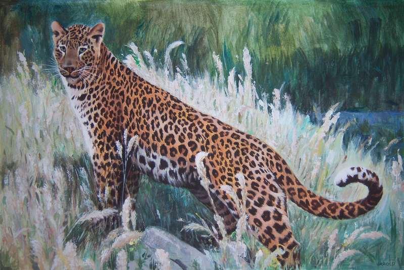 Tribute to Harold Sherman-leopard.jpg