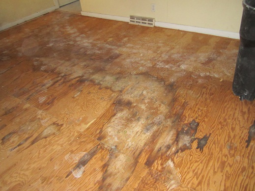 Mystery wet spots on living room floor-living-room-floor-2.jpg