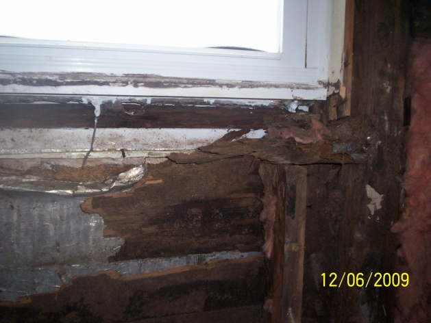 OMG rotted wallz!!-maries-picture-006.jpg