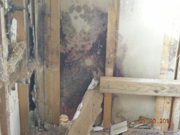 Black mold on plywood subfloor-masterbath-moldwall.jpg